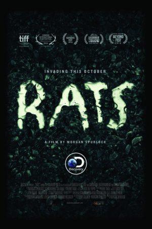 rats-24x36-683x1024