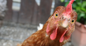 Fowl Play: Chickens in Video Games